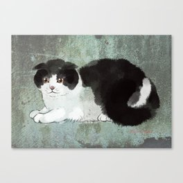 Scottish Fold Cat Canvas Print