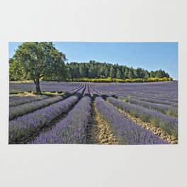 Lavender fields, Provence, France Rug