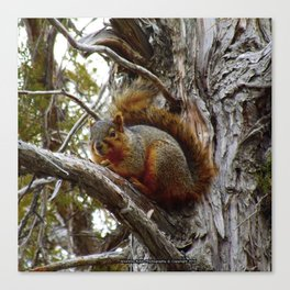 Jeronimo Rubio Photography | Peanut the Squirrel | I See You Canvas Print