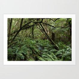 Australian Jungle Art Print