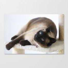 Sulley, A Siamese Cat Canvas Print