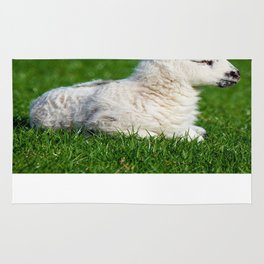 A Sleepy Newborn Lamb In A Field Rug