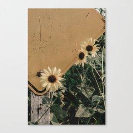 black-eyed susans Canvas Print