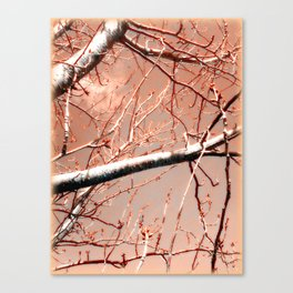 Budding Branches Canvas Print