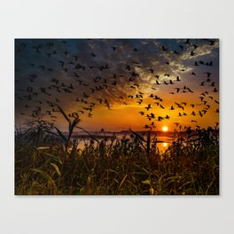 flying birds in the sky with sunset view Canvas Print