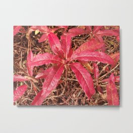 Autumn Colored Leaves Metal Print
