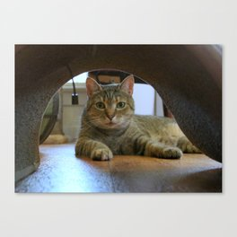 Mouse-eye View of Cat Canvas Print