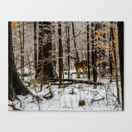 Deer in the Glistening Forest by Teresa Thompson Canvas Print