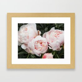 Flower Photography | Peonies Cluster | Blush Pink Floral | Peony Framed Art Print