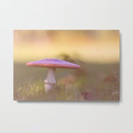 Fly agaric mushroom Metal Print