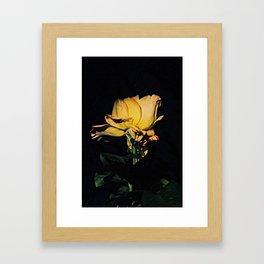 withering rose Framed Art Print