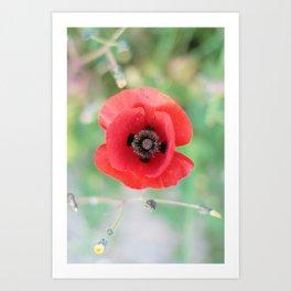 Happy Poppy Art Print