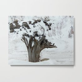 Stumpy and the Rock Wall in Winter White Metal Print