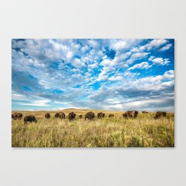 Grazing - Bison Graze Under Big Sky on Oklahoma Prairie Canvas Print