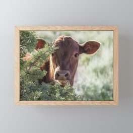 Shy Calf Framed Mini Art Print