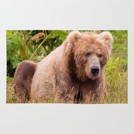 Brown Bear Kodiak Rug