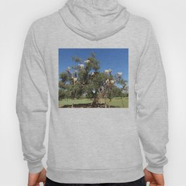 Goats in a tree Hoody