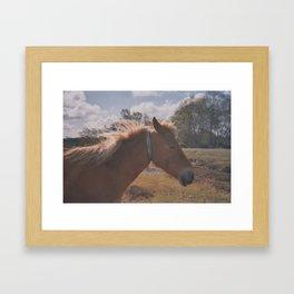 Wild Horse at Heart Framed Art Print