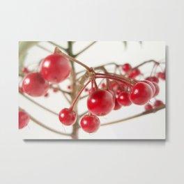 Scarlet Berry  Metal Print