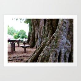 Ancient Rainforest Tree Art Print
