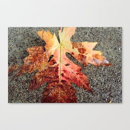 and the leaves were all falling. Canvas Print