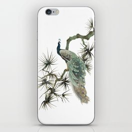 Turquoise Peacock iPhone Skin