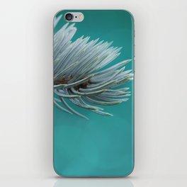 Blue spruce 3 iPhone Skin