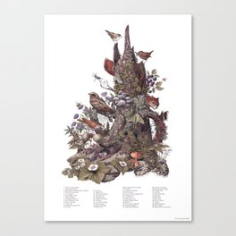 Stump (with labels) Canvas Print