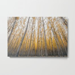 Boardman Trees Metal Print