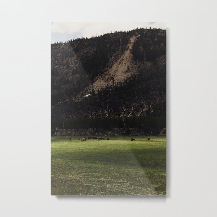Buffalo in the Meadow Metal Print