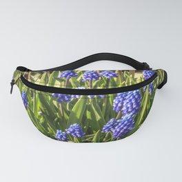 Grape hyacinths muscari Fanny Pack