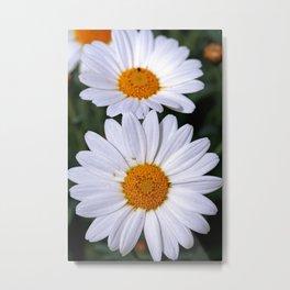 Marguerites - Flowerpower Metal Print