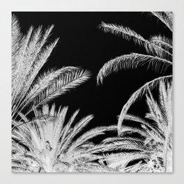 Palm Trees B&W Canvas Print