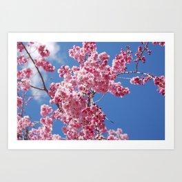 pink sky Art Print