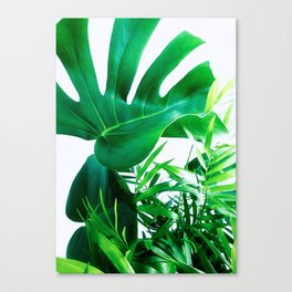 Tropical Display Canvas Print