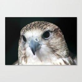 Saker Falcon 3 Canvas Print