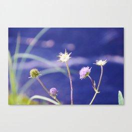 Field Scabious Knautia Arvensis Canvas Print