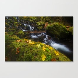 Dividing the Forest Canvas Print