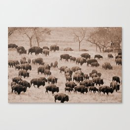 Buffalo Herd in Sepia Canvas Print