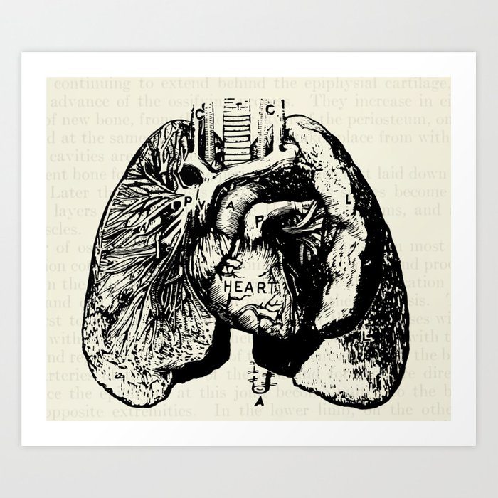 Vintage Anatomy Illustration of the Heart and Lungs Art Print by ...