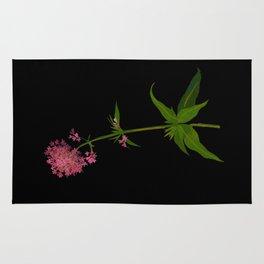 Mary Delany Floral Collage Vintage Botanical Art Valeriana Rubra Rug