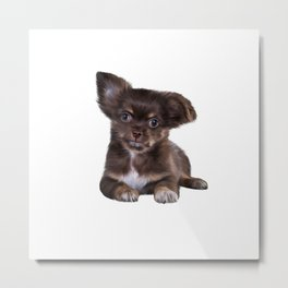 Drawing Puppy Chihuahua Metal Print