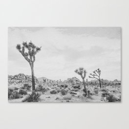 JOSHUA TREE XVII / California Canvas Print