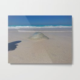 the Gilly fish northern coast of Egypt Metal Print
