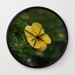 Yellow Orange Potentilla Wall Clock
