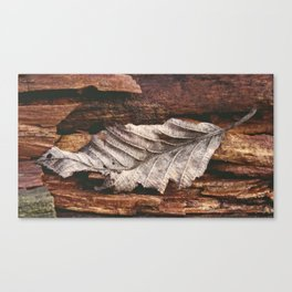 weathering collection #2 Canvas Print