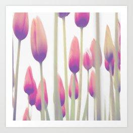 Tulip sunset Art Print