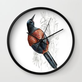 Mr Tieke , New Zealand Saddleback bird Wall Clock