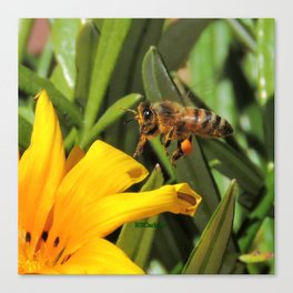 Pollen Express 221 Canvas Print