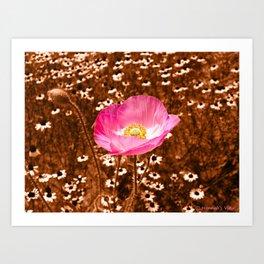 A Poppy Among the Daises  Art Print